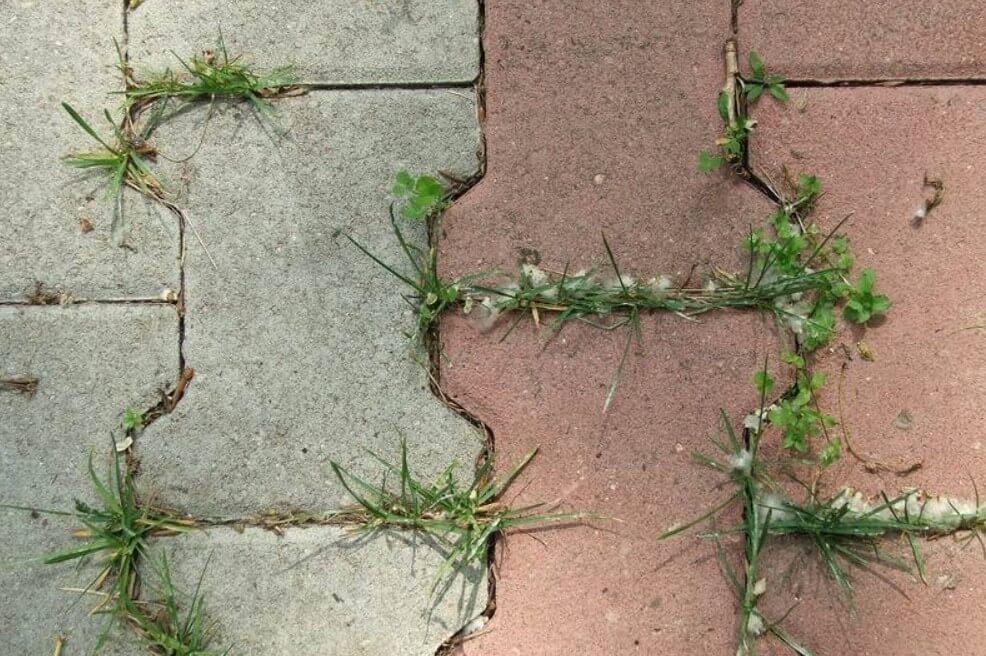 материал под тротуарную плитку от роста травы ФОТО