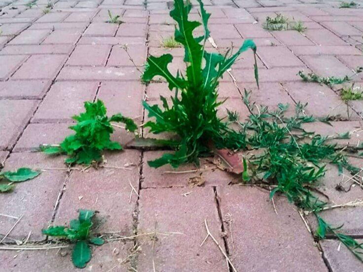 Как очистить тротуарную плитку от травы ФОТО
