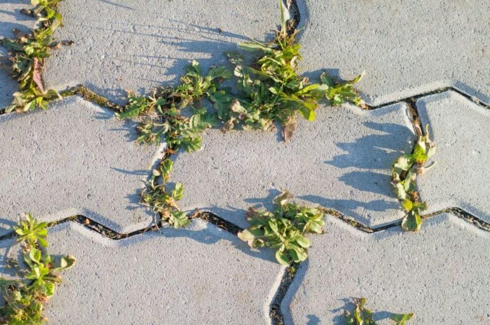 Как убрать мох с брусчатки ФОТО