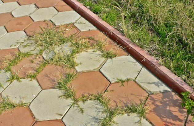 Советы по борьбе с травой между тротуарной плиткой ФОТО