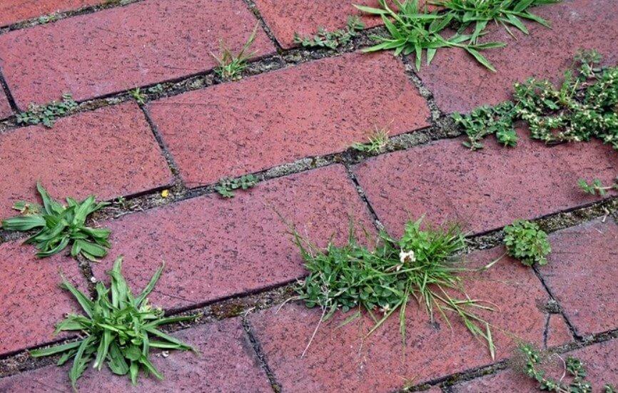 предотвращения роста травы ФОТО