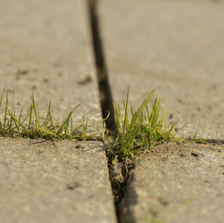 эффективные методики для удаления сорняков ФОТО