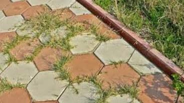 между плитками растет трава ФОТО